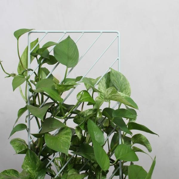 Ferm Plant Wall fra Greenify