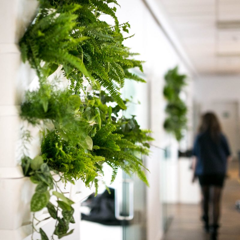 Jord og planter fra Greenify