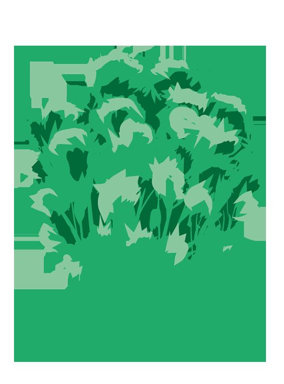 Persille fra Greenify