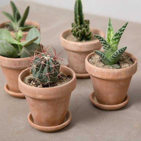 lille kaktuspakke