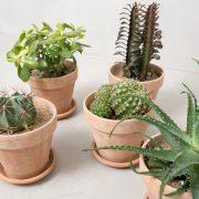 Stor_kaktuspakke_detalje1_Greenify