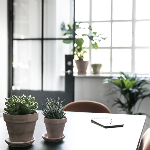 plantepakke_greenify_kontorbeplantning