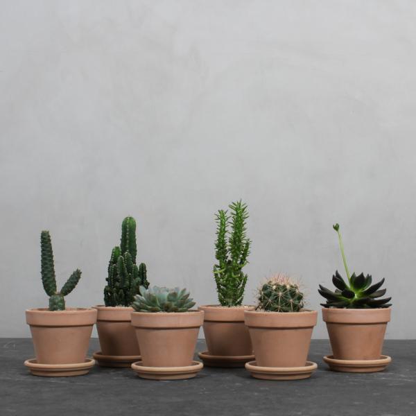 Mellem Kaktuspakke fra Greenify