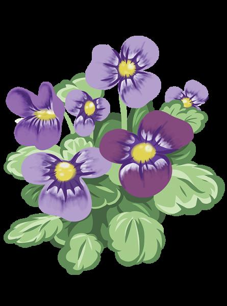 Hornviol - Fyld selv altankasser fra Greenify