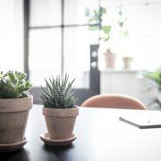 Kaktuspakke