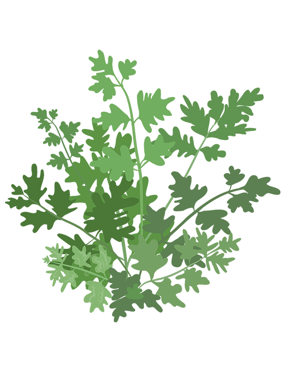 Kørvel - Fyld selv altankasser fra Greenify