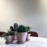 Komplet Plantepakke