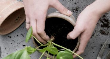 Plantepleje med Greenify