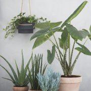 Aloe Vera Senecio Sansevieria Alocasia Zebrina Ferm Living Plant Hanger