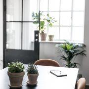 Kaktuspakke-komplet-kontorpakke-indeklima-plantepakke-kontorbeplantning-kentiapalme-monstera2-3