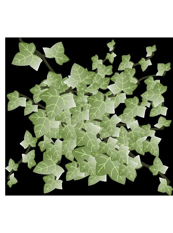 Efeu  - Fyld selv altankasser fra Greenify
