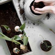 Plant_Box_Small_1