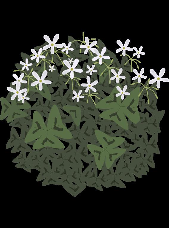 Grøn Sommerfuglekløver - Fyld selv altankasser fra Greenify