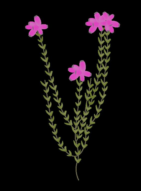 Pink Klokkelyng - Fyld selv altankasser fra Greenify