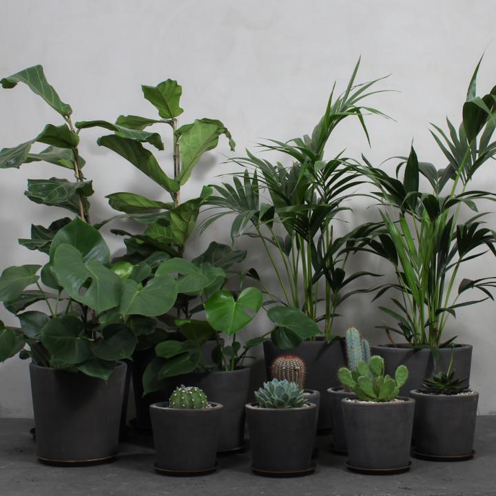 Stor Plantepakke fra Greenify