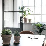 Plantepakke-kvadrat1