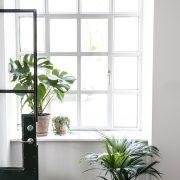 Plantepakke-kvadrat5