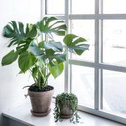 Plantepakke-kvadrat6