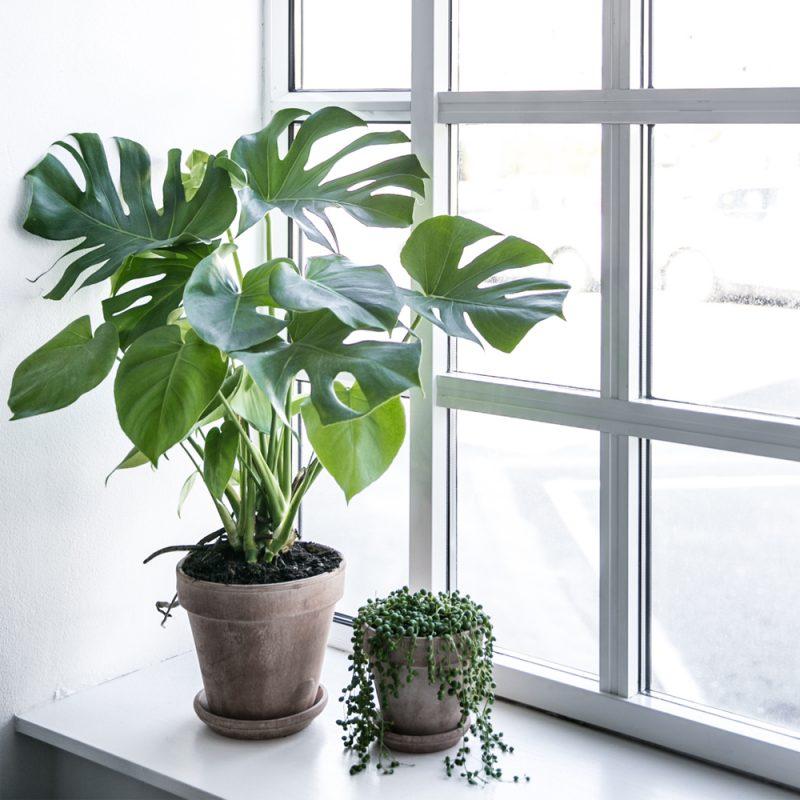 køb planter københavn