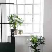 komplet-kontorpakke-kontorbeplantning-kentiapalme-monstera-600x600