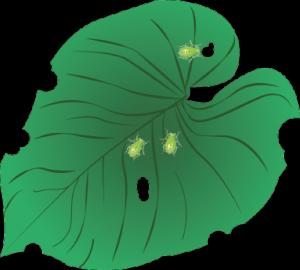 planteguide2_skadedyr
