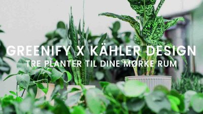 Greenify x Kähler Design - Mørketolerante planter