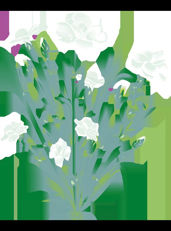Hvid Nellike - Fyld selv altankasser fra Greenify