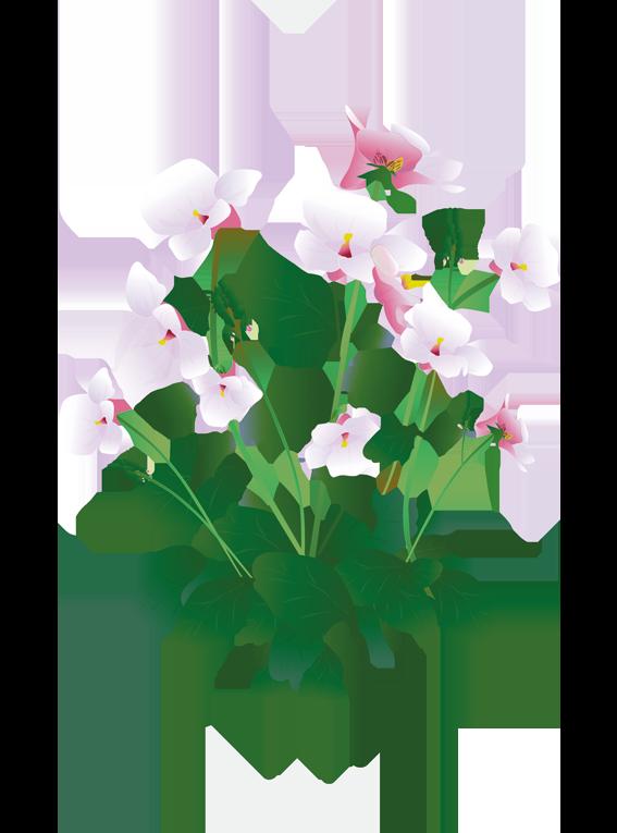 Tvillingeblomst- Fyld selv altankasser fra Greenify
