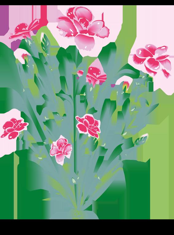 Pink Nellike - Fyld selv altankasser fra Greenify