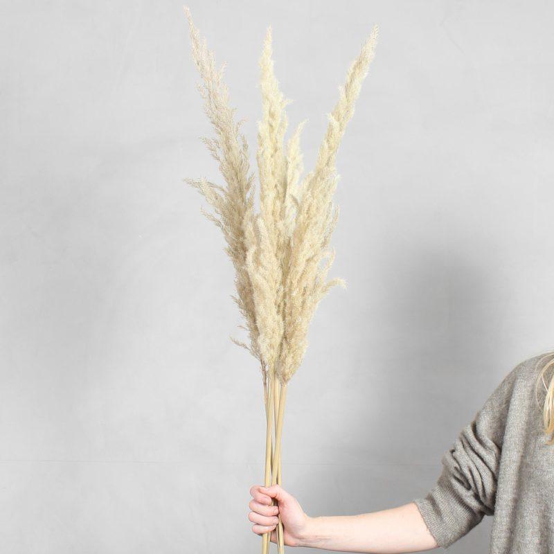 Pampas græs fra Greenify