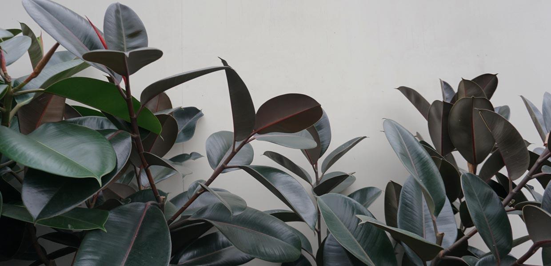 Indendørsplanter fra Greenify