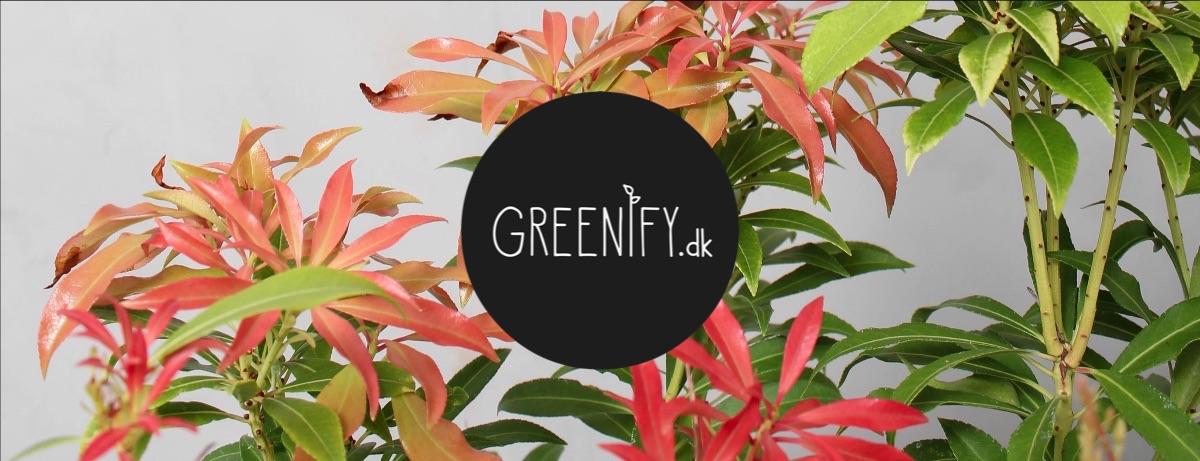 Få en klar efterårsaltan med Greenify