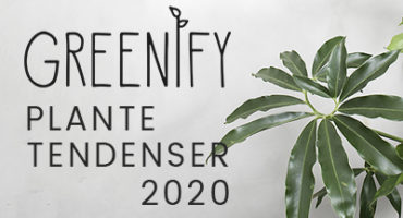 Greenify-plante-tendenser-2020