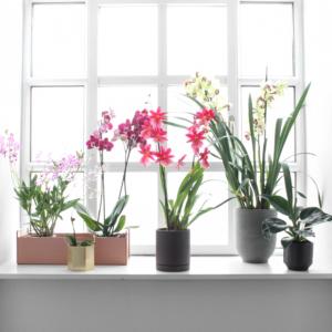 Orkideer fra Greenify
