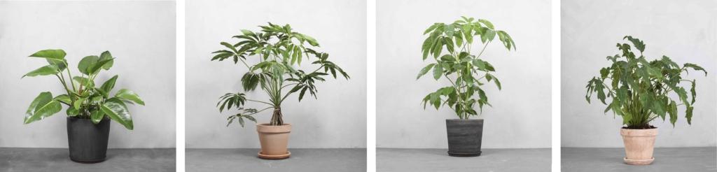 Store planter med volumen fra Greenify