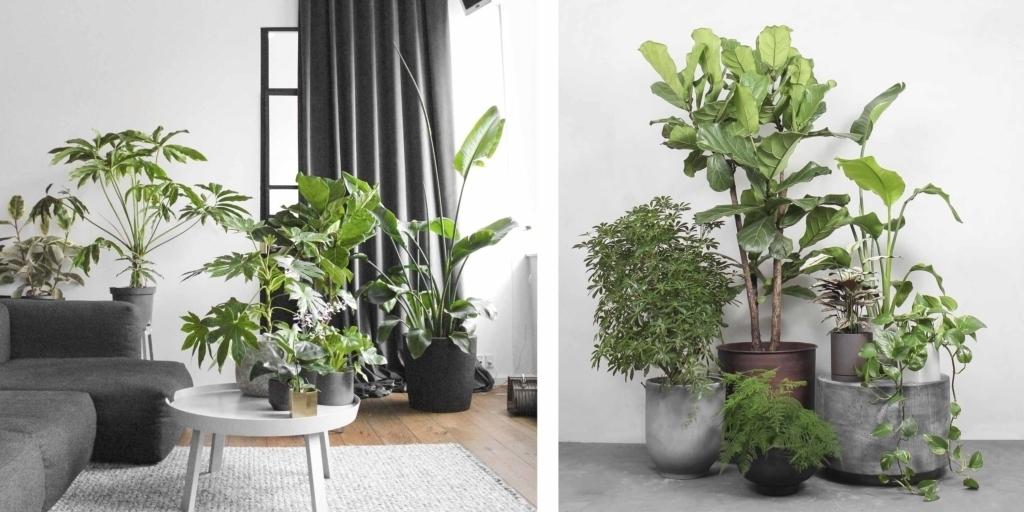 Planter fra Greenify