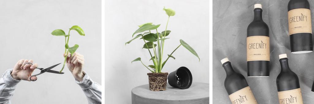 Foraarsplantepleje Greenify