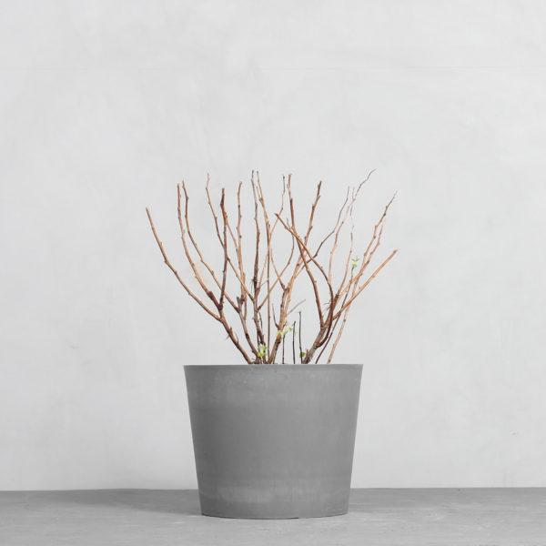 Tornfri Hindbær fra Greenify