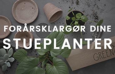 Forårsklargør dine stueplanter med Greenify