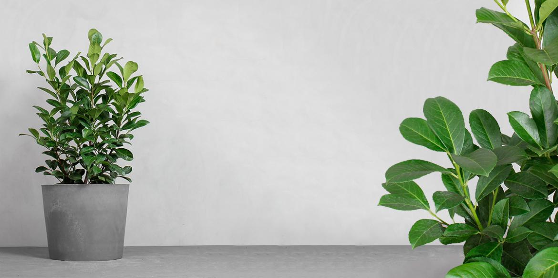 Greenify udendørsplanter