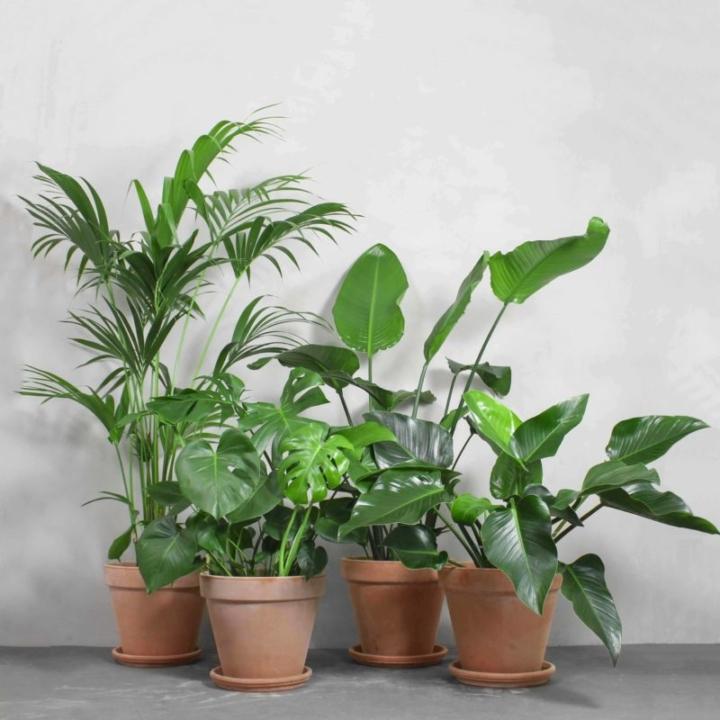 Junglepakken fra Greenify