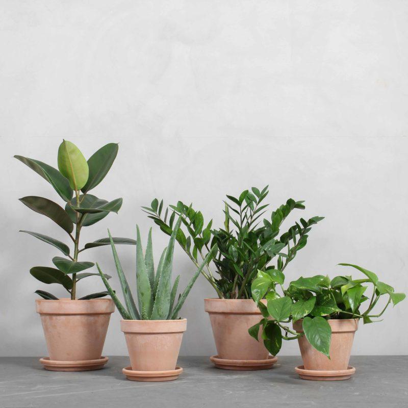 Den Luftrensende Plantepakke fra Greenify
