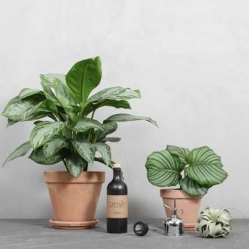 Plantenørdpakken fra Greenify