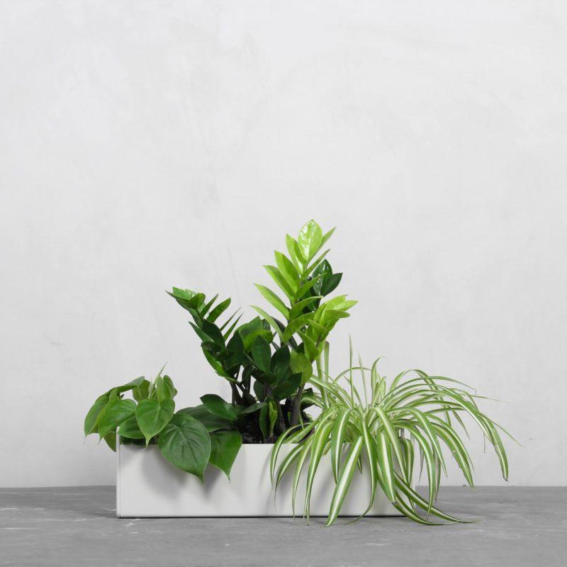 Lille Plant Box Pakke fra Greenify
