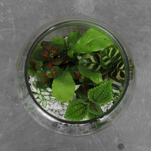 Planteterrarium fra Greenify