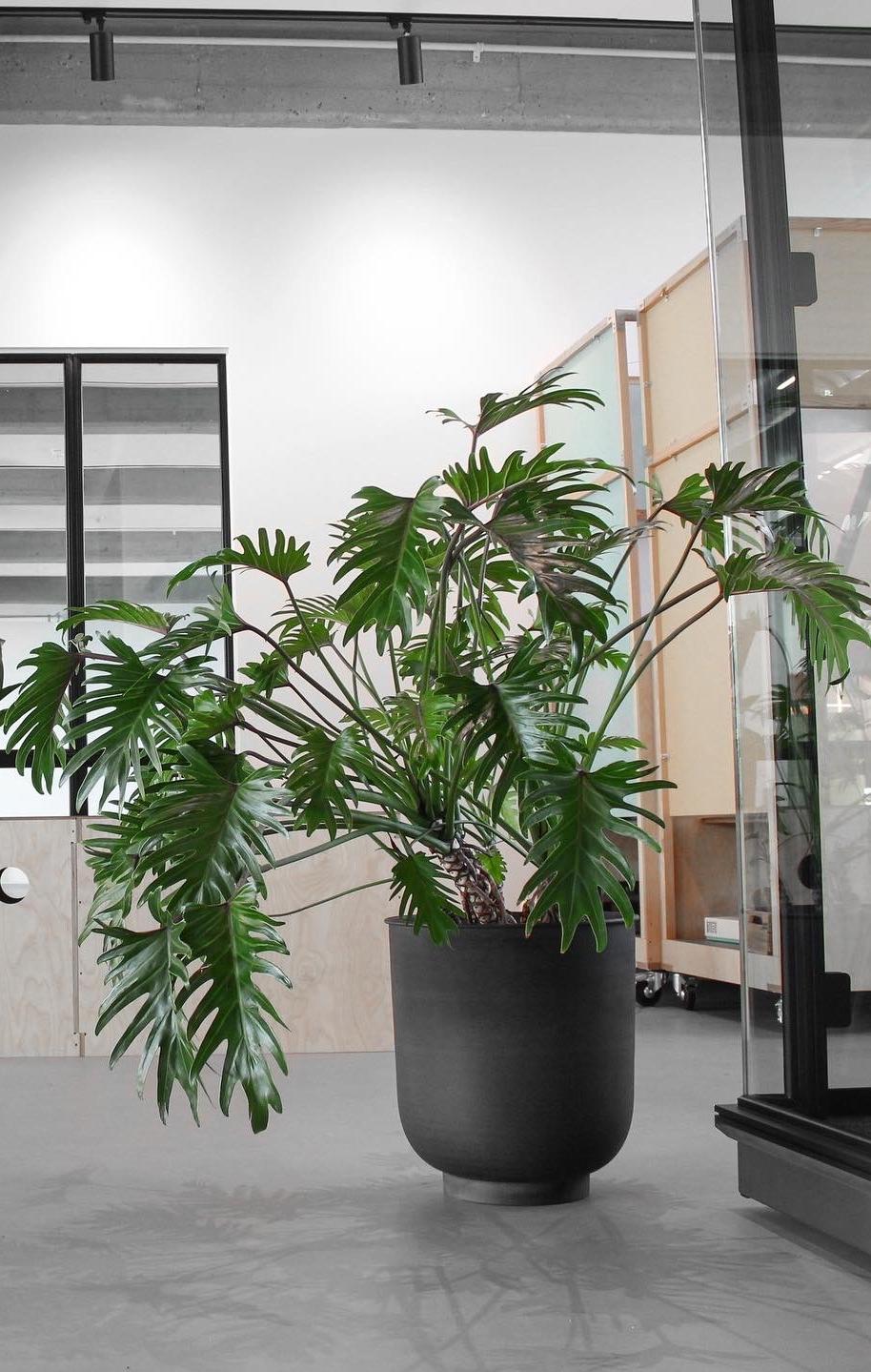 GroupM - Kontorbeplantning - Planteservice - Virksomheder - Cases