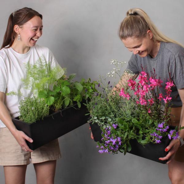 Udendørs | Udendørsplanter Plantebloggen |Altankasser