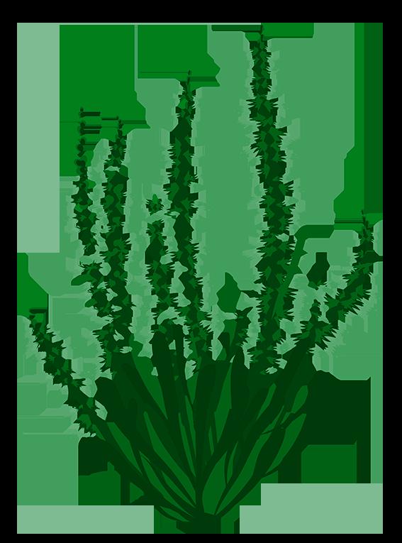 Grøn Lyng