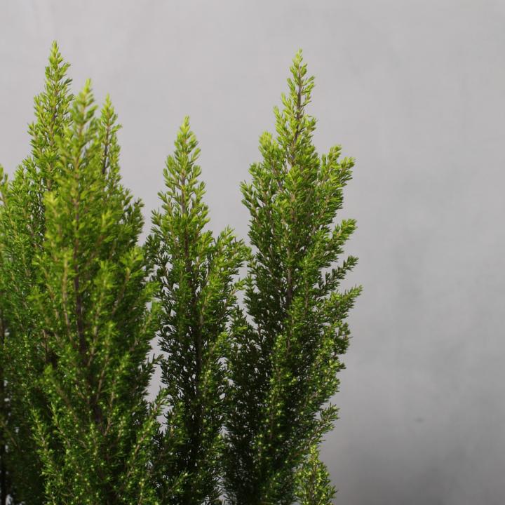 Trælyng fra Greenify